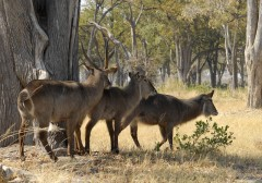 African Safari Planner  -  Zambia Wildlife Safaris