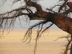 African Safari Planner  -   Botswana Safaris, Wilderness Exploration