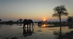 Destination Botswana  -  Okavango Delta Elephant Sunset