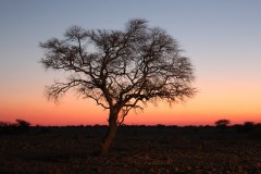 Destination Nambia  -  Etosha National Park Sunset