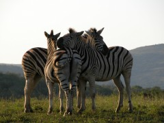 Destination South Africa  -  Imfolozi Game Reserve