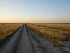 Self Drive Itineraries  -  Botswana, Central Kalahari
