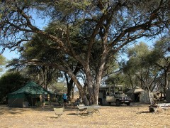 Botswana Wildlife Safaris  -   Khwai Mobile Camp