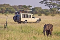 Tanzania Wildlife Safaris  -   On Safari