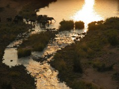 Walking Safaris  -  Kruger Elephants at Sunset