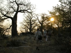 Walking Safaris  -  Kruger Nyalaland