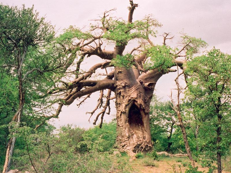 Baobab SA