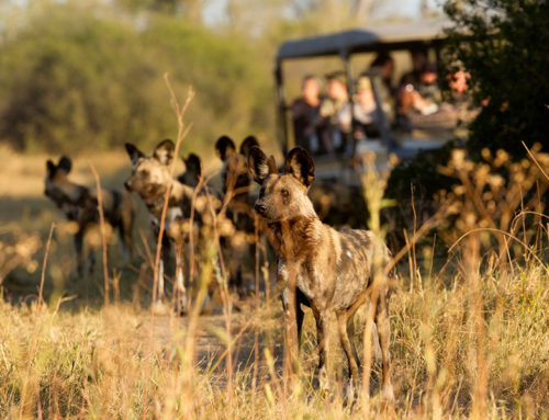 7 Day Botswana Miracle Rivers Guided Mobile Safari