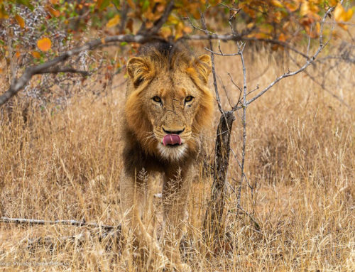 12 Day Cape Town, Kruger & Vic Falls Safari Package