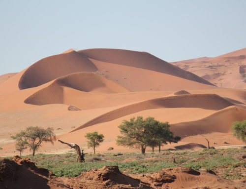 11 Day Northern Namibia Safari Package