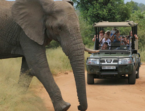 5 Day Kruger Park Guided Safari
